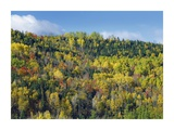 Fall colors, Chic-Chocs, Quebec, Canada Prints by Tim Fitzharris