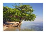 Roatan Island, Honduras Prints by Tim Fitzharris