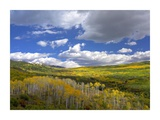 Gunnison National Forest in fall, Colorado Prints by Tim Fitzharris