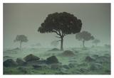Rain storm on the Serengeti Plains, Kenya Kunst af Tim Fitzharris