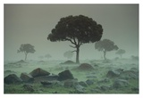 Rain storm on the Serengeti Plains, Kenya Art by Tim Fitzharris