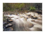 Oak Creek at Grasshopper Point, Sedona, Arizona Prints by Tim Fitzharris