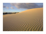 Sand dune, Monahans Sandhills State Park, Texas Posters by Tim Fitzharris