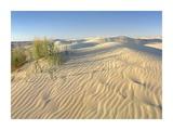 Sand dunes, Monahans Sandhills State Park, Texas Prints by Tim Fitzharris
