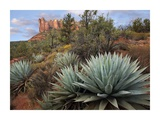 Agave and Coffee Pot Rock near Sedona, Arizona Print by Tim Fitzharris