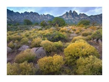 Organ Mountains, Chihuahuan Desert, New Mexico Prints by Tim Fitzharris