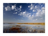 Marsh, Padre Island National Seashore, Texas Prints by Tim Fitzharris