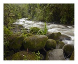Mindo River flowing through cloud forest, Ecuador Prints by Tim Fitzharris