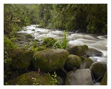 Mindo River flowing through cloud forest, Ecuador Posters by Tim Fitzharris