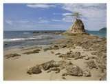 Point with tree on Penca Beach, Costa Rica Posters par Tim Fitzharris