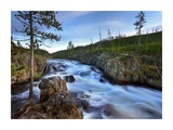 Firehole river, Yellowstone National Park, Wyoming Prints by Tim Fitzharris