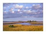 Saltwater marshes at Cedar Key, Florida Prints by Tim Fitzharris