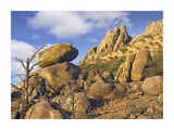 Rockpile, Davis Mountains, Chihuahuan Desert, Texas Prints by Tim Fitzharris