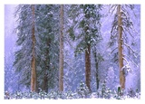Winter in Yosemite National Park, California Posters by Tim Fitzharris