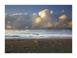 Beach and waves, Corcovado National Park, Costa Rica Prints by Tim Fitzharris