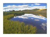 Sky reflected in water Cottonwood Pass, Colorado Prints by Tim Fitzharris