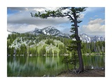Pine trees reflected in Fairy Lake, Montana Prints by Tim Fitzharris
