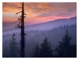 Sunset over forest, Crater Lake National Park, Oregon Art by Tim Fitzharris