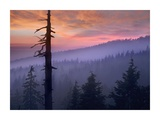 Sunset over forest, Crater Lake National Park, Oregon Posters by Tim Fitzharris