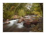 Oak Creek in Slide Rock State Park near Sedona, Arizona Posters by Tim Fitzharris
