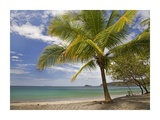Palm trees line Penca Beach, Costa Rica Prints by Tim Fitzharris
