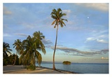 Coconut Palm trees on Pamilacan Island, Philippines Posters by Tim Fitzharris