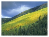 Aspen forest, Maroon Bells, Snowmass Wilderness, Colorado Posters by Tim Fitzharris