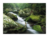Roaring fork river, Great Smoky Mountains National Park, Tennessee Posters by Tim Fitzharris