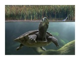 Turtle breathing at surface, Jurong Bird Park, Singapore Posters af Tim Fitzharris