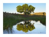 Tree reflecting in creek near Black Mesa State Park, Oklahoma Prints by Tim Fitzharris
