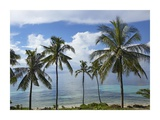 Coconut Palm trees, Bikini Beach, Panglao Island, Philippines Prints by Tim Fitzharris