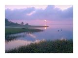 Marsh at sunrise over Eagle Bay, St Joseph Peninsula, Florida Prints by Tim Fitzharris