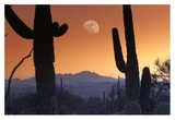 Kitt Peak under moon from Saguaro National Monument, Arizona Print by Tim Fitzharris