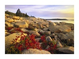 Atlantic coast near Thunder Hole, Acadia National Park, Maine Prints by Tim Fitzharris