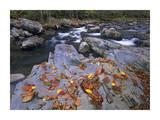 Little Pigeon River, Great Smoky Mountains National Park, Tennessee Prints by Tim Fitzharris