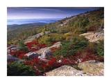 Atlantic coast from Cadillac Mountain, Acadia National Park, Maine Prints by Tim Fitzharris