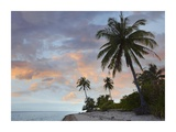 Coconut Palm trees, Pamilacan Island, Bohol Island, Philippines Posters by Tim Fitzharris
