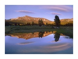 Mount Dana reflected in pond, Yosemite National Park, California Prints by Tim Fitzharris