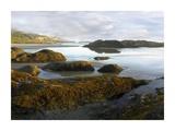 Seaweed covered rocks exposed at low tide, Neptune Beach, Oregon Print by Tim Fitzharris