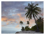 Coconut Palm trees, Pamilacan Island, Bohol Island, Philippines Prints by Tim Fitzharris
