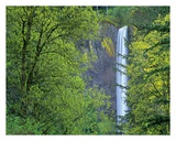 Latourell Falls, Columbia River Gorge near Portland, Oregon Print by Tim Fitzharris