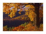 Autumn deciduous forest, Shenandoah National Park, Virginia Posters by Tim Fitzharris