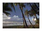 Palm trees on the beach near Marino Ballena National Park, Costa Rica Prints by Tim Fitzharris