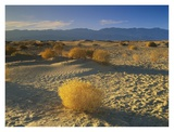 Mesquite Flat Sand Dunes, Death Valley National Park, California Poster by Tim Fitzharris