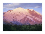 Mount Rainier at sunrise, Mount Rainier National Park, Washington Posters by Tim Fitzharris