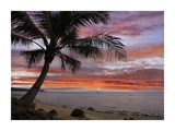 Coconut Palm at sunset near Dimiao, Bohol Island, Philippines Prints by Tim Fitzharris