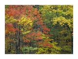 Fall foliage at Fishers Gap, Shenandoah National Park, Virginia Art by Tim Fitzharris