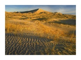 Kelso Dunes and grasses, Mojave National Preserve, California Posters by Tim Fitzharris