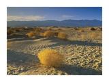 Mesquite Flat Sand Dunes, Death Valley National Park, California Láminas por Tim Fitzharris