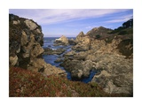 Iceplant growing on cliffs at Rocky Point, Big Sur, California Posters by Tim Fitzharris